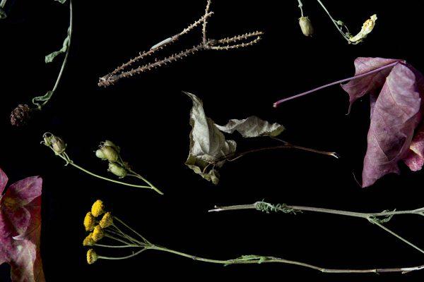 Materials from nature. Photo by Eeva Suorlahti.